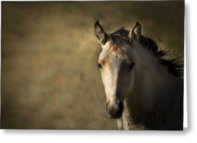 Wild Mustangs Of New Mexico 35 Greeting Card