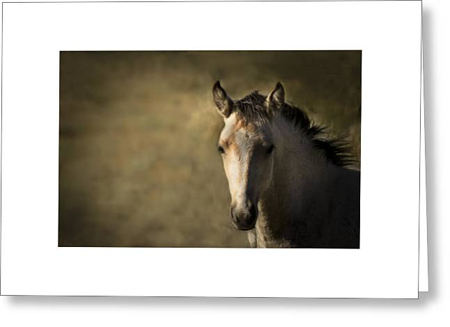 Greeting Card featuring the photograph Wild Mustangs Of New Mexico 35 by Catherine Sobredo