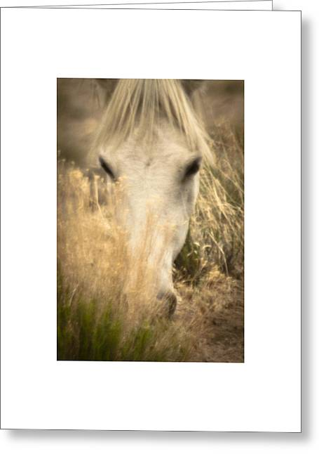 Wild Mustangs Of New Mexico 36 Greeting Card