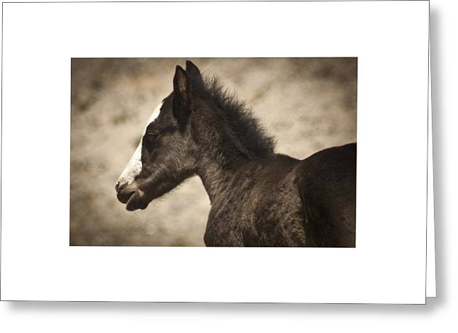 Wild Mustangs Of New Mexico 37 Greeting Card