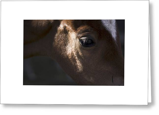 Wild Mustangs Of New Mexico 41  Greeting Card
