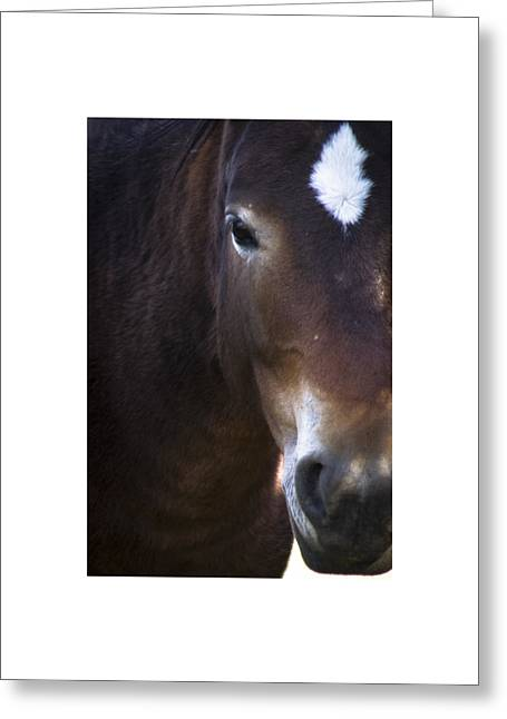 Wild Mustangs Of New Mexico 42 Greeting Card