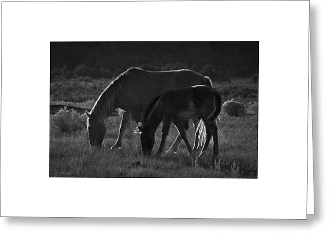 Wild Mustangs Of New Mexico 7 Greeting Card