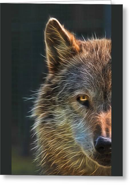 Wild Night Greeting Card by Gill Billington