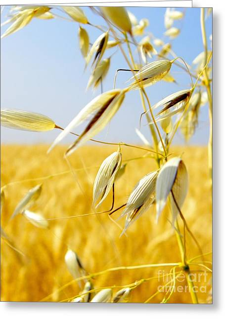 Wild Oats Greeting Card by KD Johnson