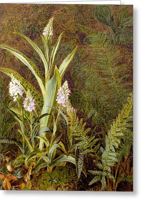 Wild Orchids Greeting Card by Marian Emma Chase