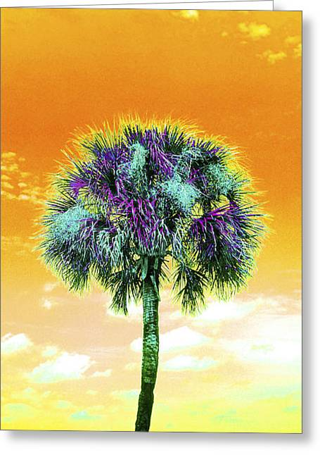 Wild Palm 5 Greeting Card