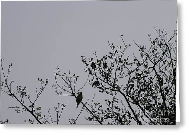 Greeting Card featuring the photograph Wild Parrot Of San Francisco by Cynthia Marcopulos