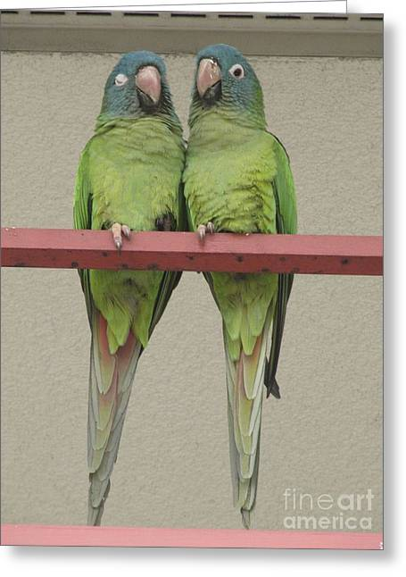Wild Parrots Greeting Card by Joan McArthur