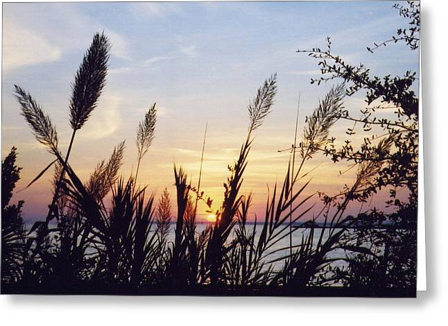 Greeting Card featuring the photograph Wild Plumes by Michele Kaiser