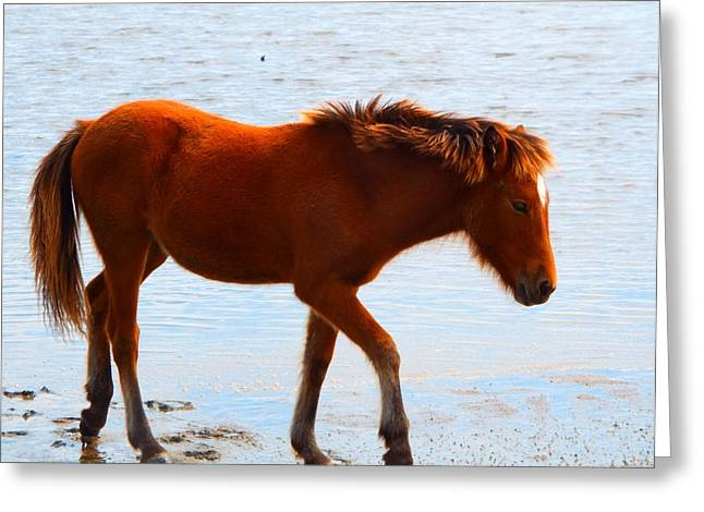 Wild Pony Greeting Card by Cindy Croal