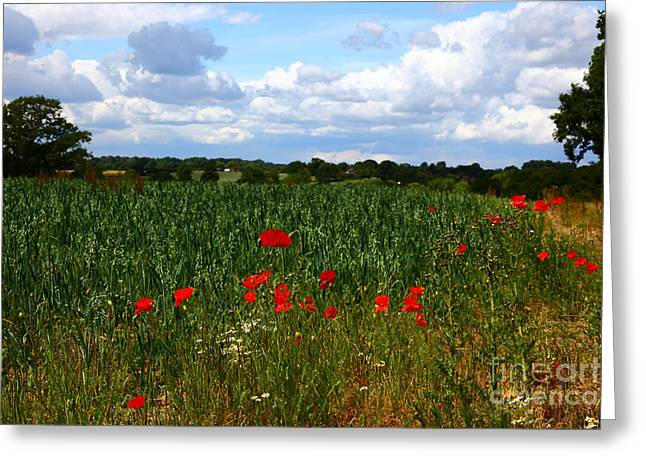 Wild Poppies And Corn Field Greeting Card by James Brunker