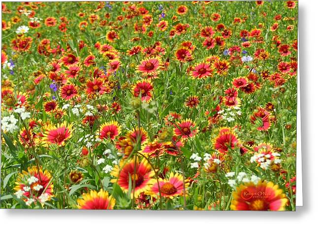 Greeting Card featuring the photograph Wild Red Daisies #3 by Robert ONeil