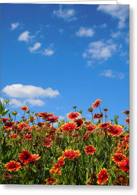 Greeting Card featuring the photograph Wild Red Daisies #6 by Robert ONeil