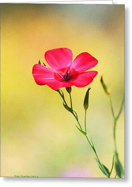 Greeting Card featuring the photograph Wild Red Flower by Tom Janca
