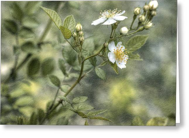 Wild Rose Greeting Card by Kathleen Holley