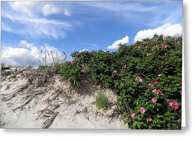 Wild Roses After High Tide Greeting Card