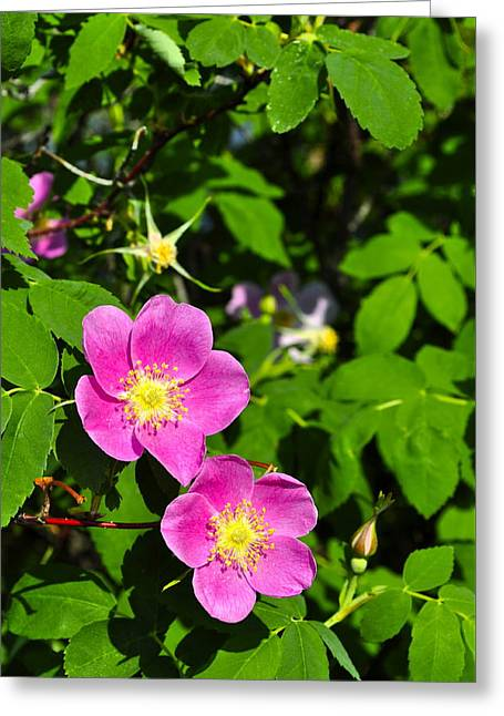 Greeting Card featuring the photograph Wild Roses by Cathy Mahnke