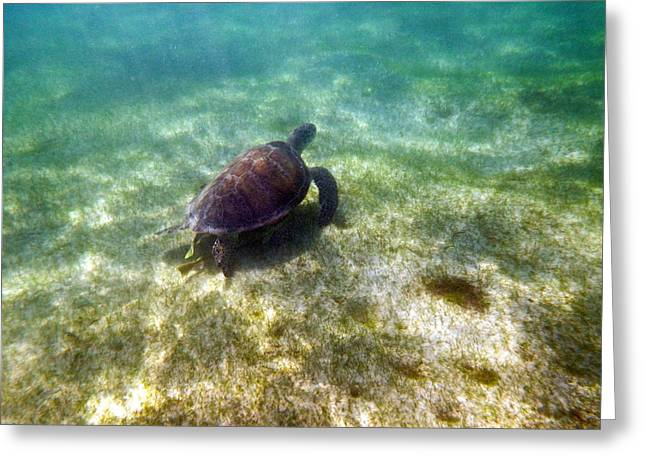 Greeting Card featuring the photograph Wild Sea Turtle Underwater by Eti Reid