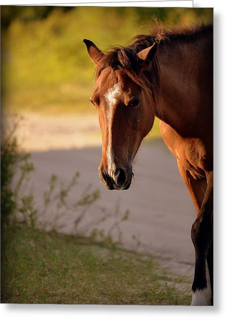 Greeting Card featuring the photograph Wild Shadows by Amanda Vouglas