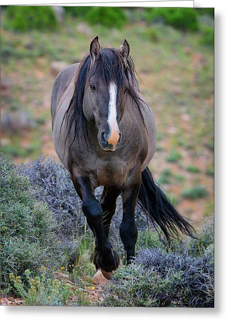 Wild Stallion Greeting Card by Greg Norrell