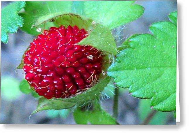 Wild Strawberry Macro Greeting Card by Padre Art
