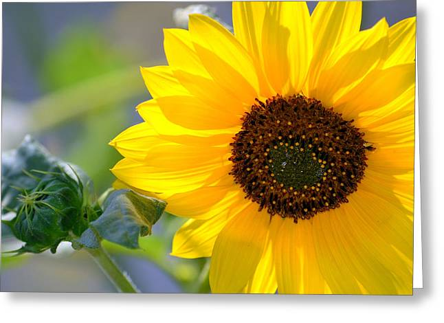 Greeting Card featuring the photograph Wild Sunflower by Nadalyn Larsen