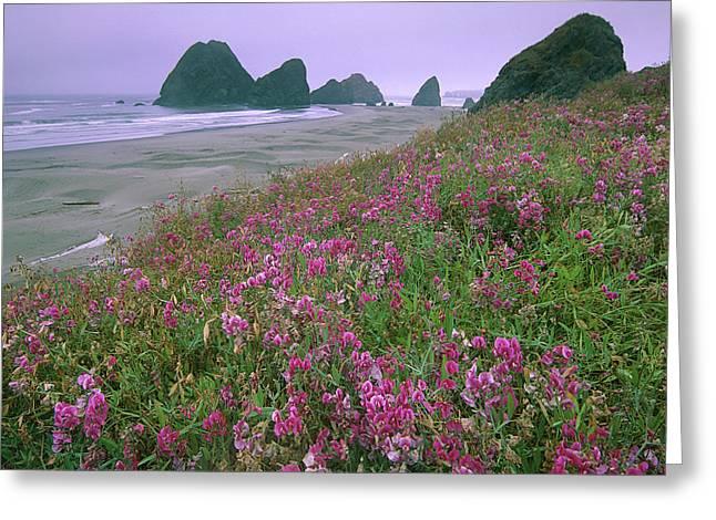 Wild Sweet Peas Overlook The Beach Greeting Card