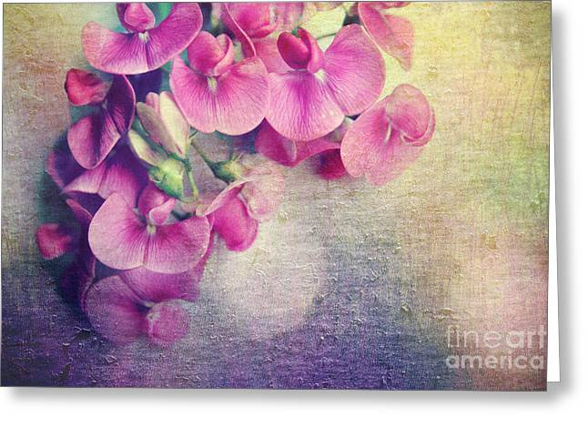 Wild Sweet Peas Greeting Card by Sylvia Cook
