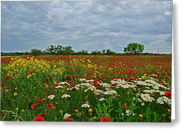Wild Texas Greeting Card