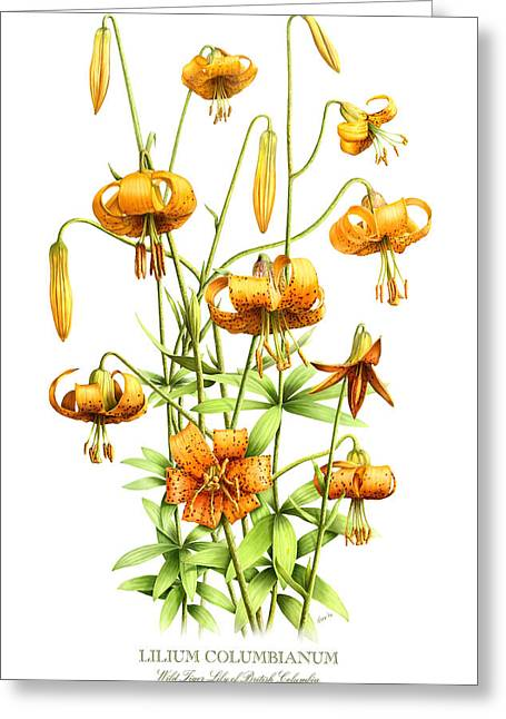Wild Tiger Lilies Greeting Card