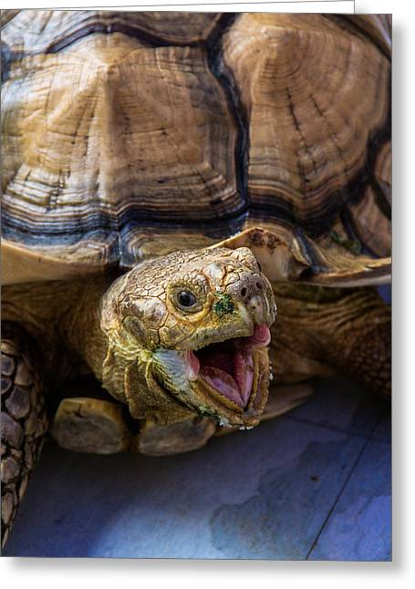 Wild Tortoise Greeting Card