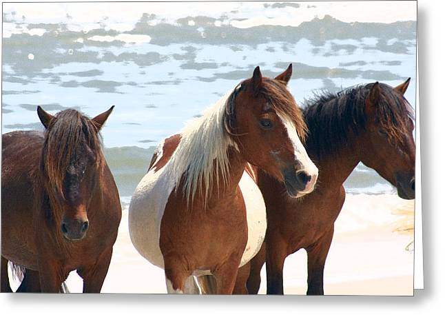 Wild Trio Greeting Card by JB Stran