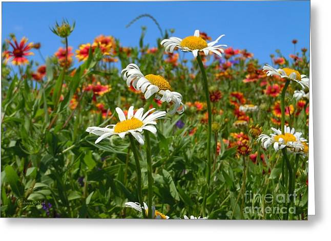 Greeting Card featuring the photograph Wild White Daisies #1 by Robert ONeil