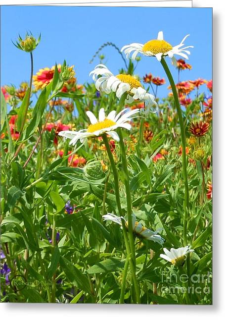 Greeting Card featuring the photograph Wild White Daisies #2 by Robert ONeil