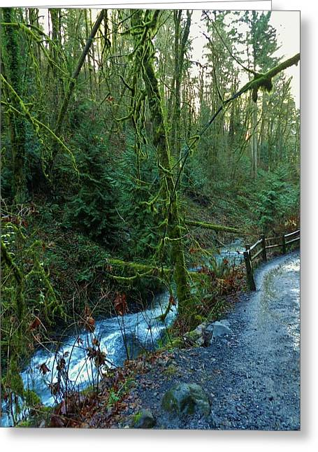 Wild Wood Trail Greeting Card by Charles Lucas