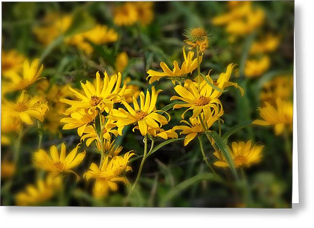 Greeting Card featuring the photograph Wild Yellow Daisies by Susan D Moody