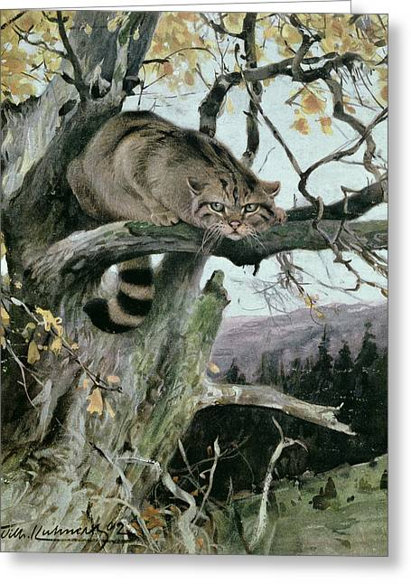 Wildcat In A Tree Greeting Card