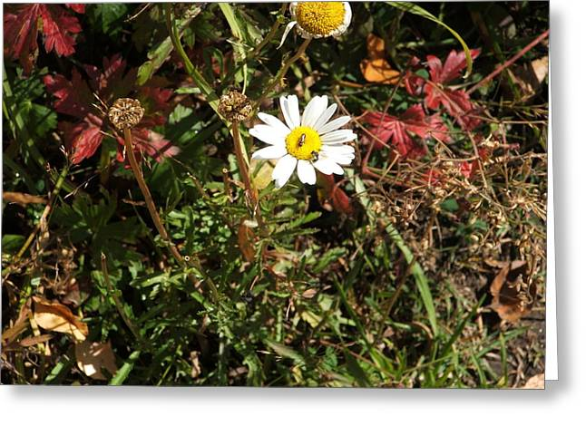 Wildflower @ Kit Carson Greeting Card