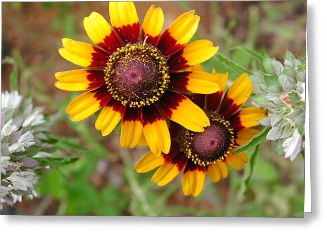 Wildflower 5 Greeting Card by Michael Rushing