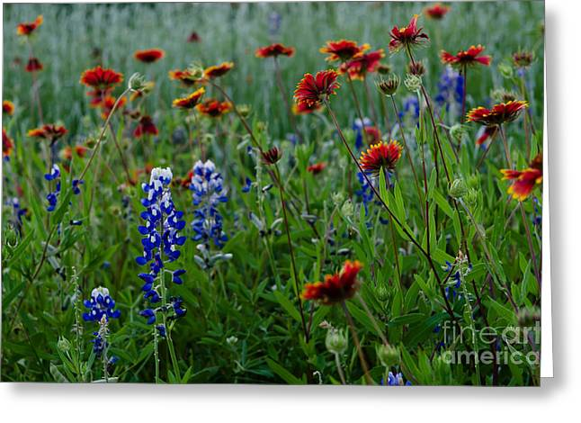 Wildflower Delight Greeting Card by Cathy Alba