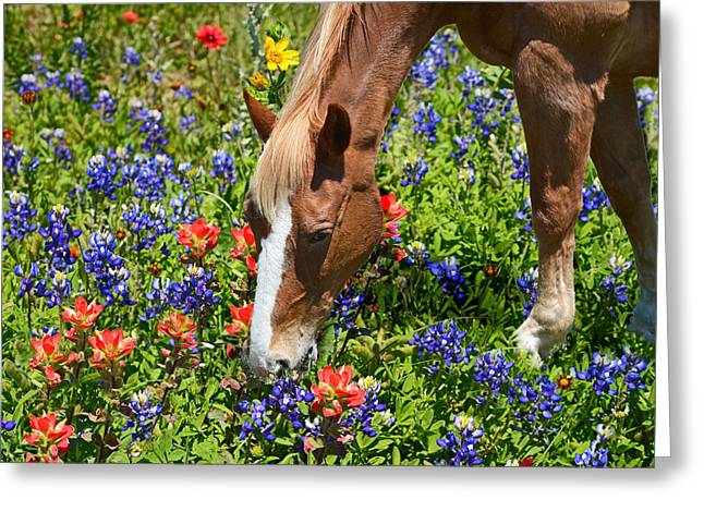 Wildflower Feast Greeting Card by Lynn Bauer
