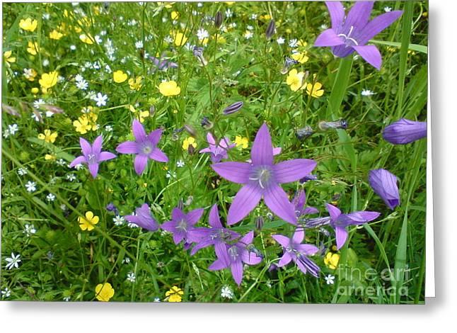Wildflower Garden Greeting Card by Martin Howard