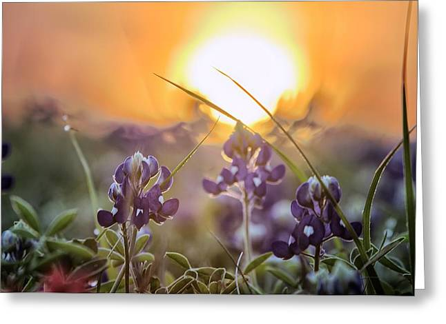 Wildflower Glow Greeting Card