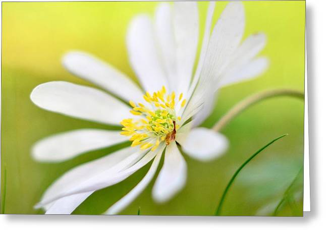 Wildflower Greeting Card by Gynt