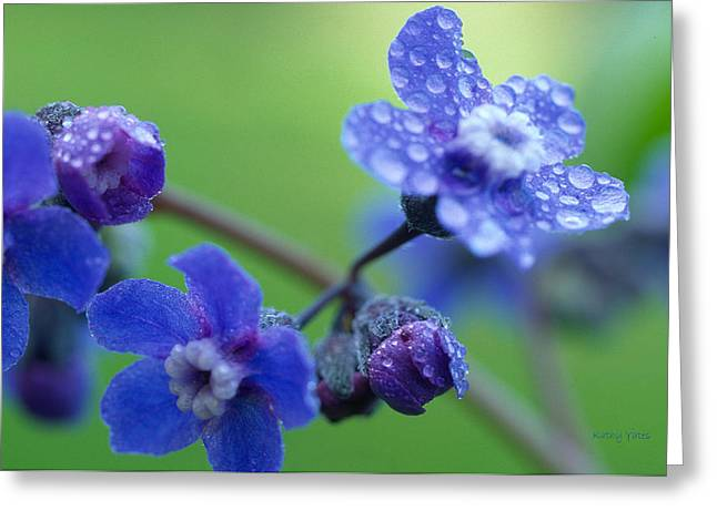 Wildflower In The Rain Greeting Card by Kathy Yates