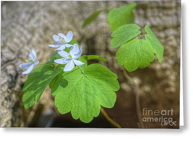 Greeting Card featuring the photograph Wildflower In Woods by Wanda Krack