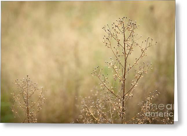 Wildflower Greeting Card by Jolanta Meskauskiene