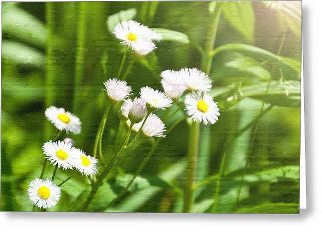 Wildflower Greeting Card by Kellie Prowse