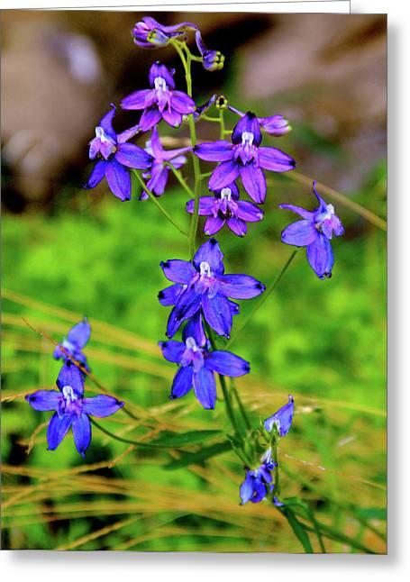 Wildflower Larkspur Greeting Card